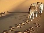 algeria-deserto.jpg
