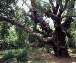 cai ragusa, bosco santo pietro caltagirone, escursioni ragusa